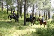 1215676804_centro escursioni s.vittoria - passeggiata a cavallo